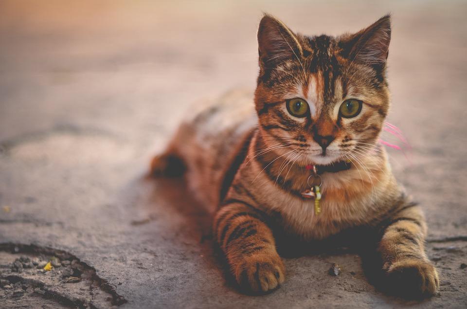 darf meine katze reis fressen