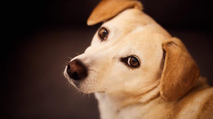 seriöse hundezuechter erkennen