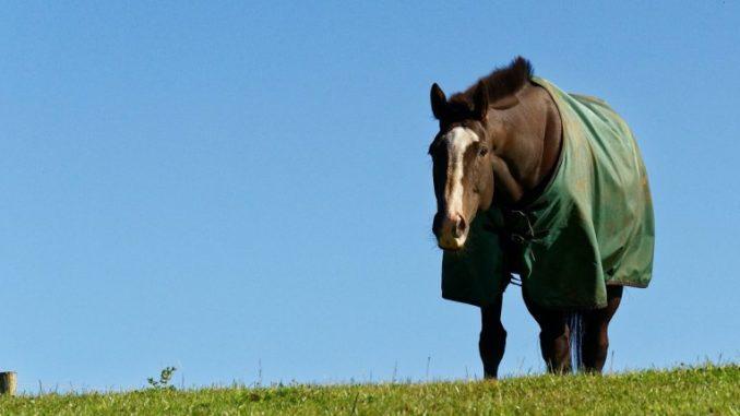 Die Abschwitzdecke für das Pferd