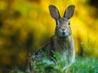 Heu für Kaninchen - optimales Beifutter für kleine Gourmets