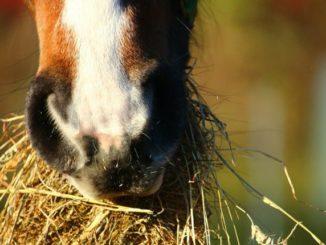 Heuraufe für das Pferd