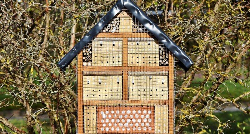 Ratgeber: Insektenhotel Füllung