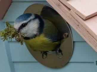 Nistkästen für Vögel