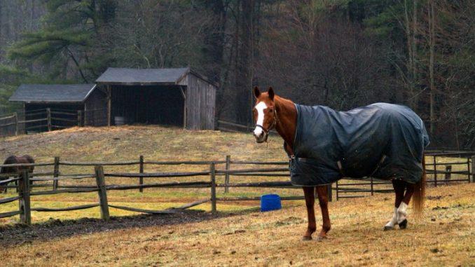 Regendecke für dein Pferd