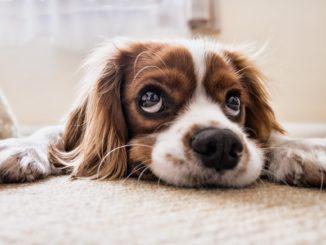 darmparasiten hund