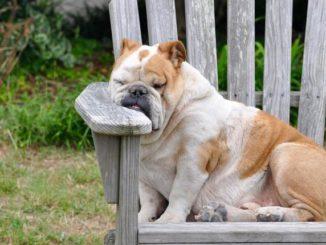 Hundebett aus Holz