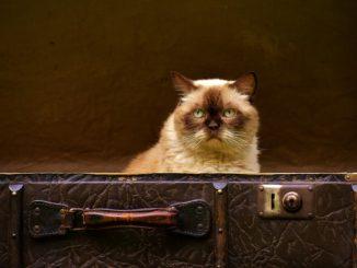 katze macht nicht ins katzenklo