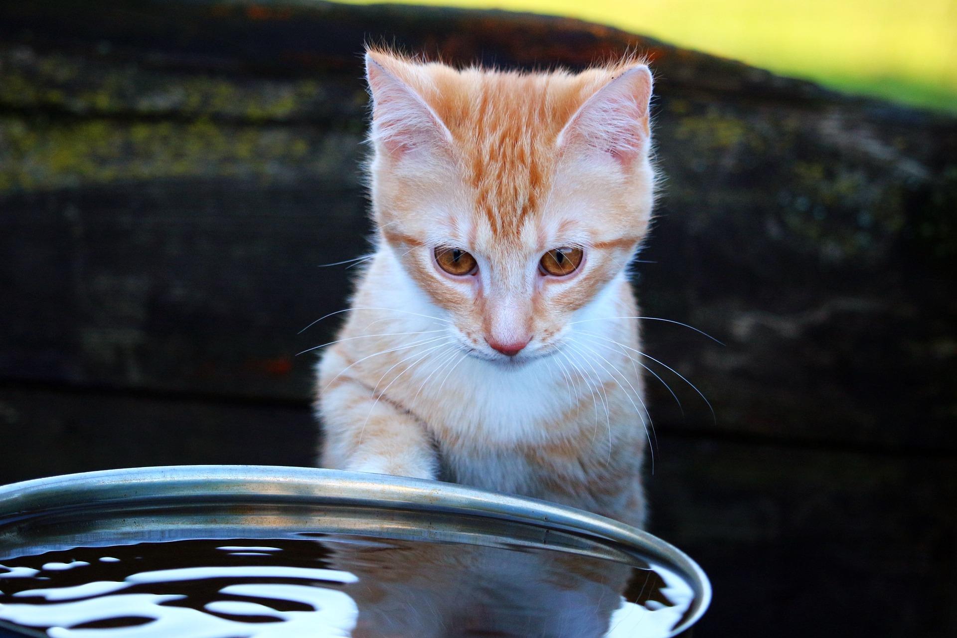 katzen fernhalten 2