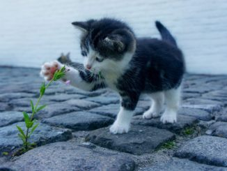 Katze fernhalten