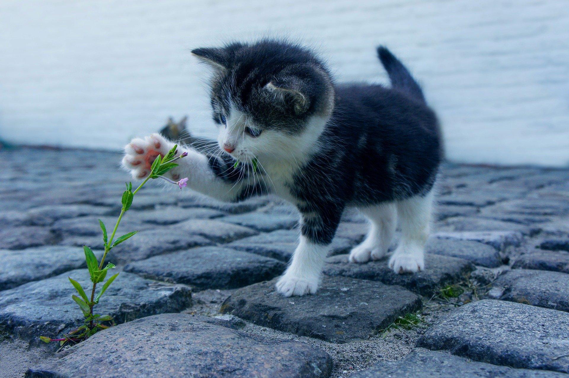 Katze fernhalten 1