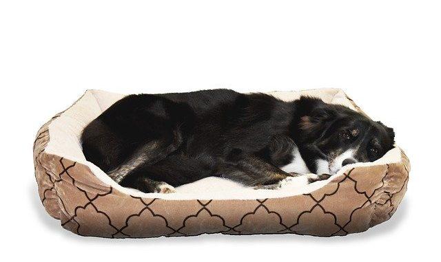 Welches Hundebett ist empfehlenswert?
