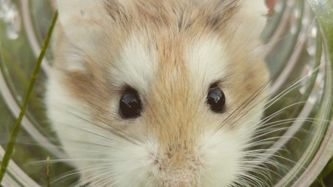 Hamster Tunnel - Welchen Tunnel für Hamster kaufen?