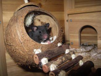Mehrkammerhaus Hamster - Das richtige Hamsterhaus finden!