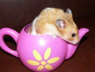 Hamsterspielzeug - So beschäftigst du deinen Hamster!
