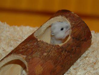 Hamster Röhrensystem