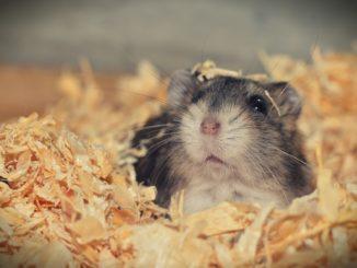Hamster Sandbad - Wohlfühlen, Buddeln, Spaß haben!