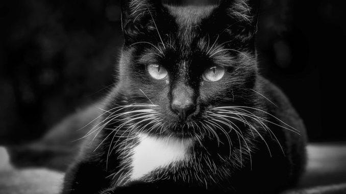enzymreiniger gegen katzengeruch