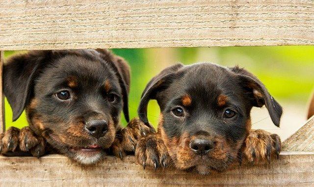 Hundespielzeug Welpe