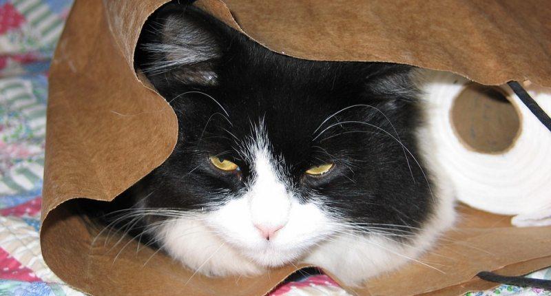 selbstreinigendes Katzenklo