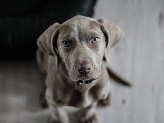 Hundehöhle XL