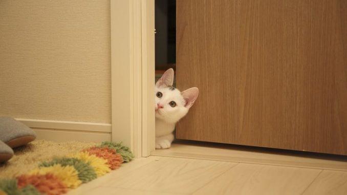 Katzenklappe isoliert