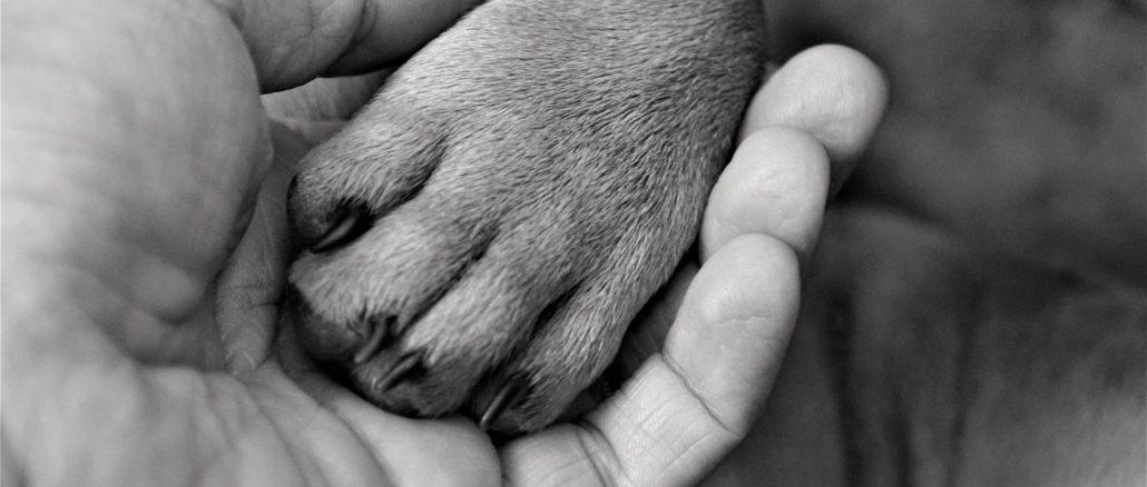 krallenpflege hund