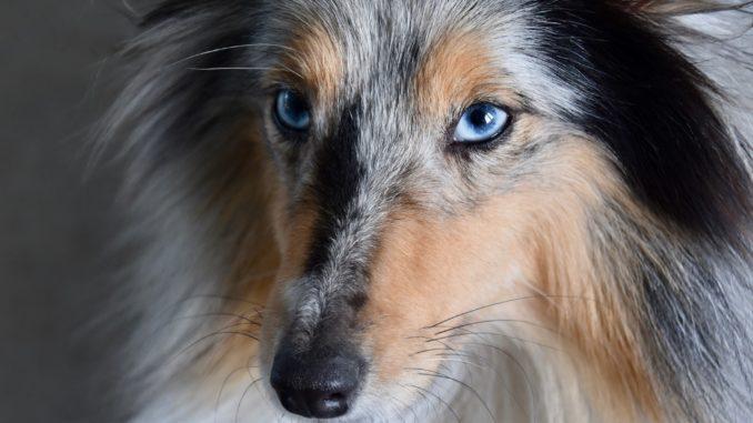 hundebürste