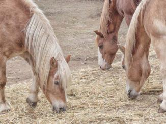 pferdefütterung bei magenproblemen