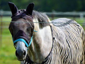 insektenschutz für pferde