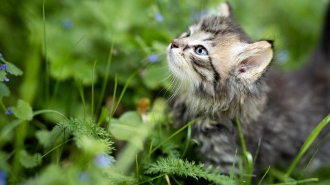 tierfreundliche gartenbepflanzung